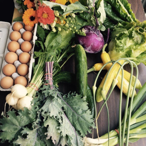 A great early-season selection of greens, squash, scapes, and more!